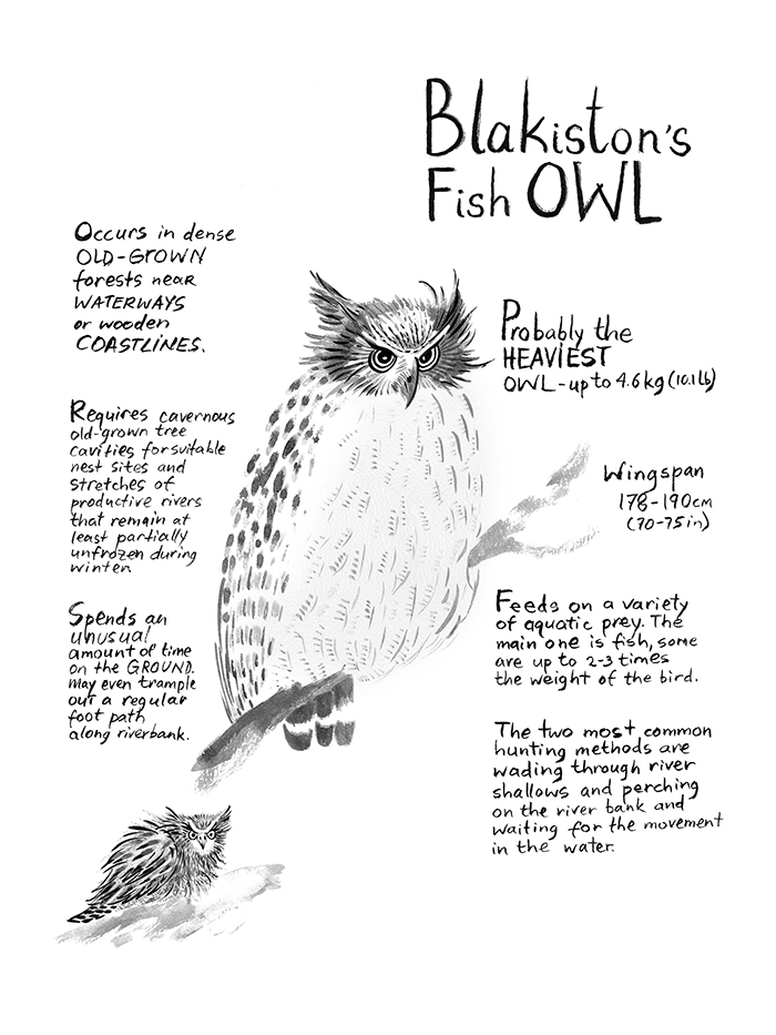 owls Inforgraphic