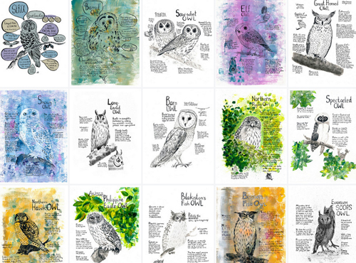project owls