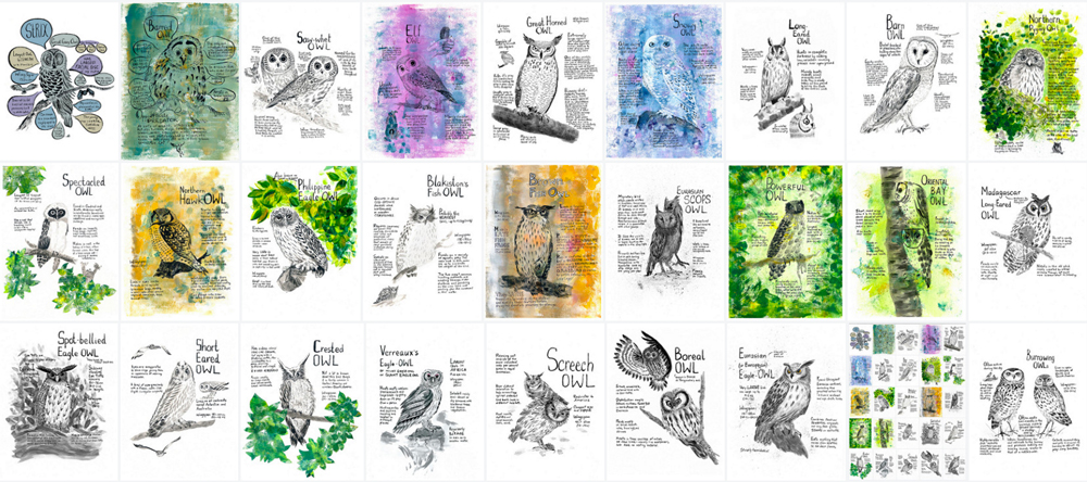 projects - owls